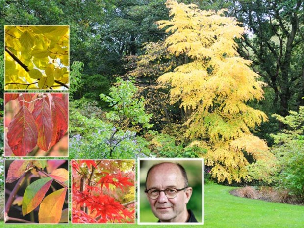 Onze groenman ziet de herfstkleuren en vertelt hoe je er zo lang mogelijk van kan genieten