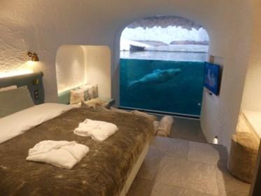 Walrussen spotten in je slaapkamer: zo overnacht je in pairi Daiza