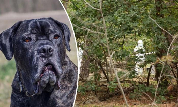 """Aangeslagen zoon van man die werd doodgebeten door zijn eigen hond: """"Basil had weken geleden al weg moeten zijn"""""""