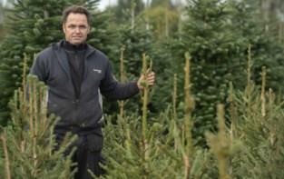 Door corona zetten we volop in op Kerstmis (en de kerstbomen worden dit jaar niet duurder)