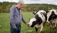 """Koeien ontspannen zich als mensen zachtjes tegen ze praten"""