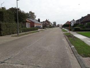 """Bewoners Emiel Van Notenlaan blij met bomenkap: """"Lijsterbes is geen geschikte straatboom"""""""