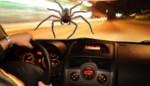Bestuurster wil spin verwijderen en verliest controle over stuur