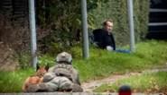 """Na """"duikbootmoord"""" uit cel ontsnapt met bommengordel: uitvinder Peter Madsen zet Denemarken opnieuw op stelten"""