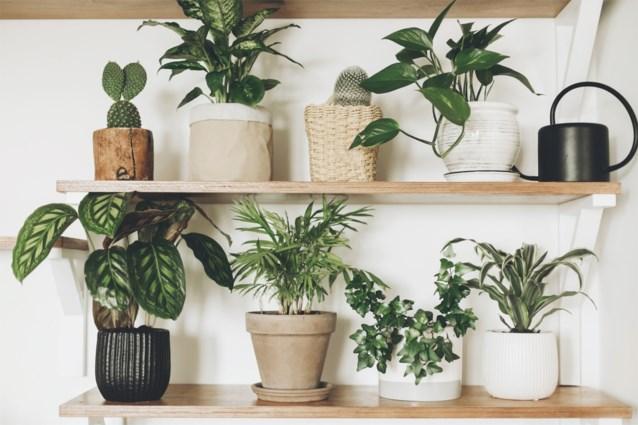 Met dit trucje krijgen je planten altijd net voldoende water