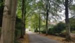 Bomen in wijk rond bekend museum hoeven niet te verdwijnen, belooft gemeente