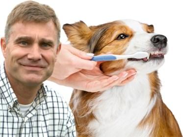 Tanden poetsen bij de hond: zo doe je dat