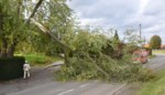 Omgewaaide boom komt op elektriciteitskabels terecht