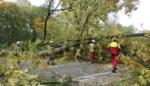Boom waait om in Westmalle: Antwerpsesteenweg versperd
