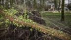 Storm op komst: code geel en nummer 1722 geactiveerd wegens risico op rukwinden en wateroverlast