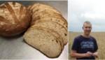 "Met 't Pajotterke ligt het eerste volledig lokale brood in de winkelrekken: ""Vroeger werd ons kwaliteitsgraan verwerkt in veevoeder"""