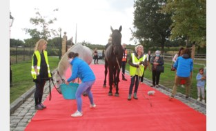 """Paard dat honderd kilometer naar kliniek stapte voor operatie, is overleden: """"Ingreep was een succes, maar Ease was erg verzwakt"""""""