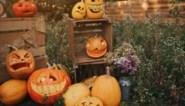Zo maak je snel een eyecatcher voor Halloween