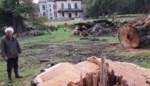 """Kasteelheer verdedigt bomenkap na felle kritiek: """"Wij doen dit niet voor ons plezier, maar voor de veiligheid"""""""