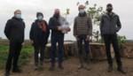"""Gesneuvelde Vollanderboom leeft verder in honderd scheuten: """"We moeten ál ons erfgoed koesteren, ook dat uit de natuur"""""""