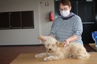 Baasjes verwennen honden met uitgebreide massagebeurt