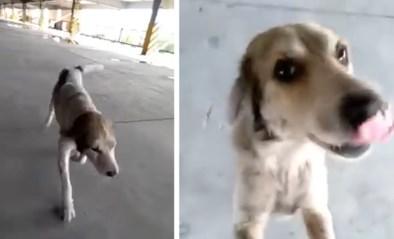 Emotionele reünie wanneer baasje na drie maanden zoeken vermiste hond terugvindt