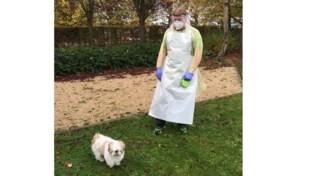 Geluk zit in kleine dingen: hondje Ajko mag met baasje naar Covid-19-afdeling in wzc