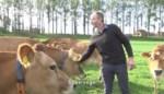 Melkveehouder uit Sint-Gillis-Waas wint innovatiecampagne met Jersey-melk