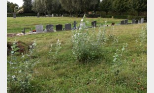 Stadsbestuur bekijkt welke verwaarloosde graven verdwijnen, tenzij familie nog in actie schiet<BR />