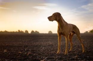 Nachtelijke wandeling met hond komt koppel duur te staan