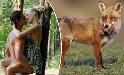 """Sinds lockdown ziet jager meer vrijende koppeltjes dan wild voor zijn camera opduiken: """"Mij stoort het niet, maar..."""""""