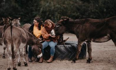 """Nieuw ezelasiel betreurt uitblijven subsidies: """"Met wat overheidssteun zouden we meer dieren kunnen helpen"""""""