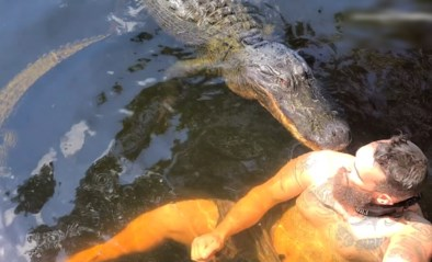 """Waaghals zwemt met """"vriendelijke"""" alligator, maar onderschat de eetlust van het dier"""