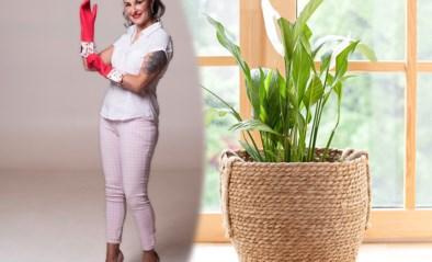 Huishoudtips van Zamarra Kok: deze kamerplanten zuiveren de binnenlucht