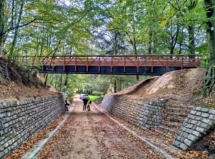 Houten voetgangersbrug van 26 ton in Astridpark geplaatst