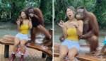 Grijpgrage orang-oetan kan handen niet thuis houden, maar de 'grappige' video kent ook een duistere kant