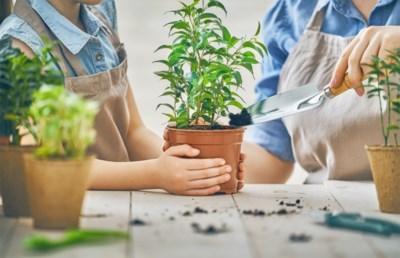 Een heel jaar een living vol groen en het kost je niets: tips voor het stekken van je planten