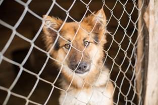 Provincie investeert 100.000 euro in professionele dierenasielen