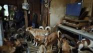 Autoriteiten treffen maar liefst 164 uitgehongerde honden aan in piepklein huisje in Japan