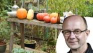 Haal je moestuin niet leeg: deze groenten bewaren beter in de tuin dan in een koelkast