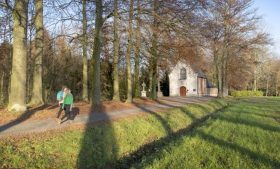 Nieuwe wandelnetwerken in het Waasland: deze wandelingen loodsen je langs een geschiedenis van water