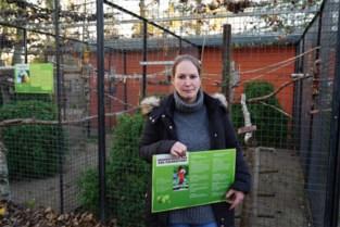 """Voormalige eigenaars van inbeslaggenomen 'illegale' papegaaien Harry Malter melden zich: """"Hopelijk krijgen we ze nu snel terug"""""""