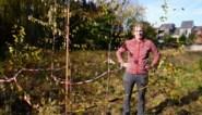 """Buurt adopteert bomen: """"Verkaveling tegenhouden lukte niet, stukje groen redden wel"""""""