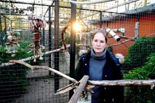 Gaia wil niet dat vier 'illegale' papegaaien terugkeren naar dierenpark Harry Malter