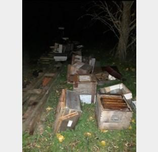 """Vandaal vernielt grote bijenkasten van imker Roland (70): """"Nu al heel wat bijen dood, en er volgen er zeker nog"""""""