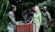 Ere-doctor UHasselt Jane Goodall: