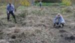 Vallei Babbelsebeek verrijkt met 900 bomen en struiken