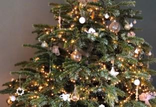 Chiro Oud-Heverlee verkoopt kerstbomen