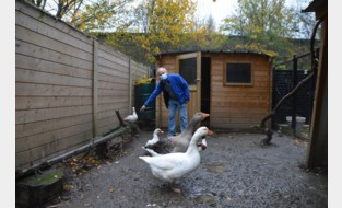 """Ophokplicht vogelgriep zorgt voor meer oproepen bij Socio-vzw: """"Iemand vroeg om een wilde fazant te komen vangen, uit schrik dat hij griep had"""""""