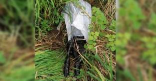 Konijn dood aangetroffen in plastic zak