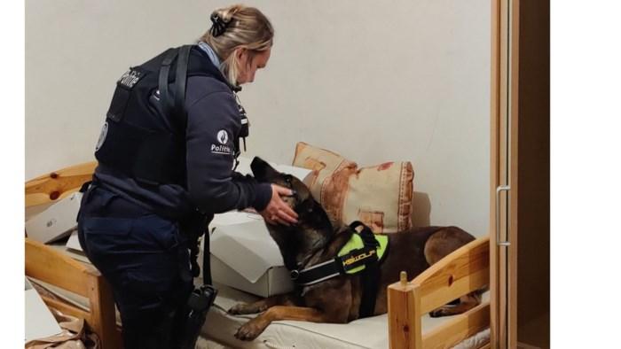 Drugshond politie Westkust helpt met mooie drugsvangst in Frankrijk
