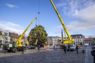 Kerstboom van 2,5 ton en 11 meter siert Markt van Ronse