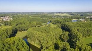 """Provincie koopt 8,5 hectare bos om er natuurreservaat van te maken: """"Binnenkort toegankelijk voor wandelaars"""""""
