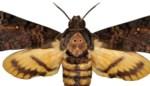 Koppel spot zeldzame vlindersoort in tuin