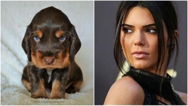Gentse puppy Lex gaat viraal dankzij Amerikaanse ster Kendall Jenner